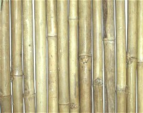 Tam Vong Bamboo